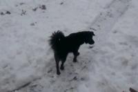 Random image: Odin_in_snow
